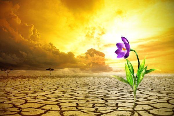 flor_no_deserto